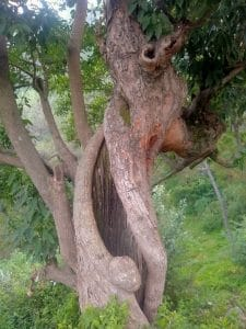 Guided Hiking Tours- twists and turns of tree found on hike